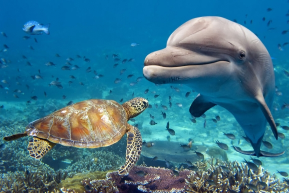 Dolphin and turtle underwater on reef background looking at you Copyright: <a href='https://hu.123rf.com/profile_izanbar'>izanbar / 123RF Stock fotó</a>