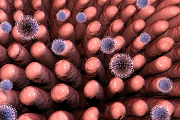 Rotaviruses. infecting intestine. 3D illustration showing intestinal villi and multiple viruses (Forrás: 123rf.com)